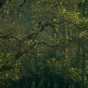 Printemps (Lays sur le Doubs)