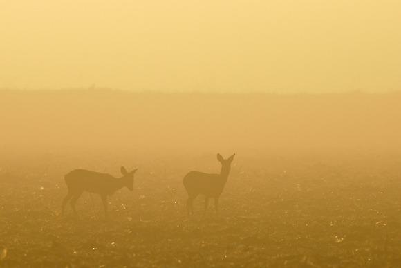 Ombres dans la brume